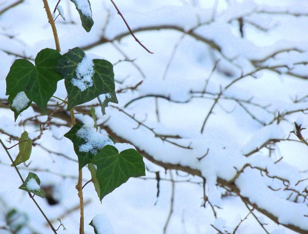 primavera o inverno....? by Silvia Tarasconi