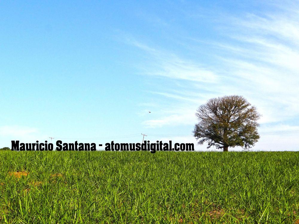 Por Mauricio Santana (atomusdigital.com) by Maurico Santana Fotografia (atomusdigital.com)