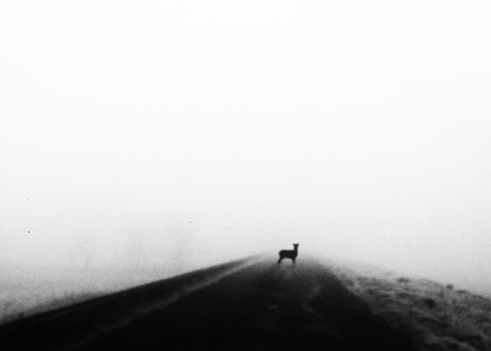 -Misty morning- by JoshuaDurrant