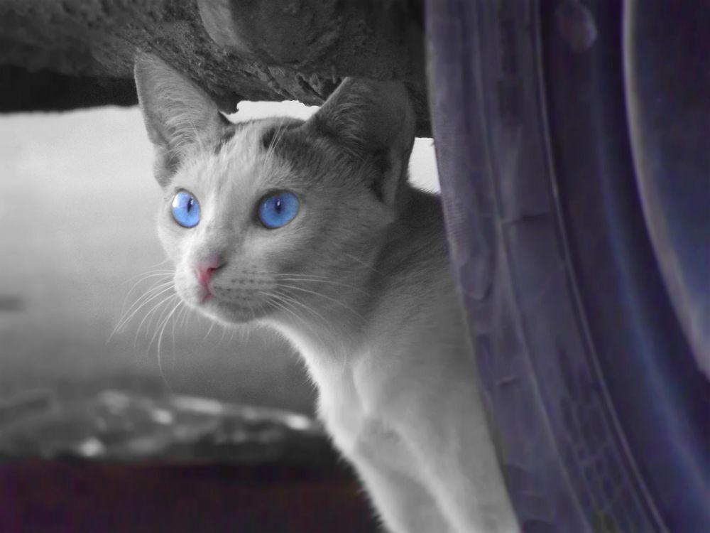 Cat Pharaonic by Mohamed Hamde