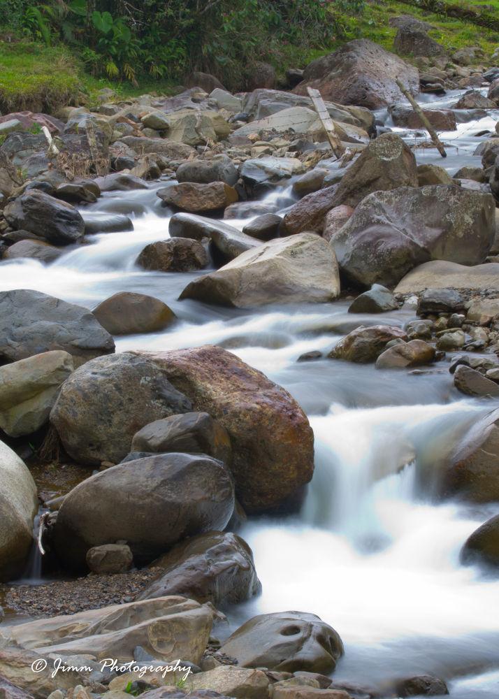 Rivers of the Jungle III by Juan Ignacio