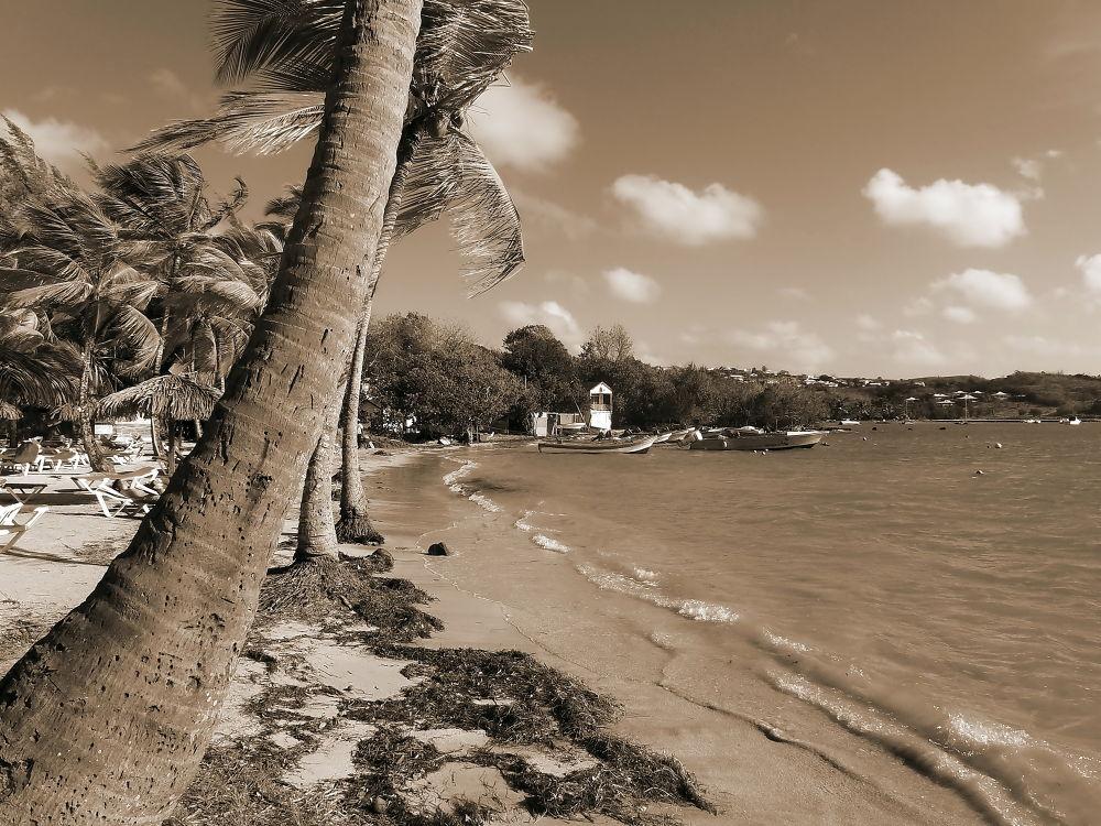 PLage de Martinique  by René Minotte