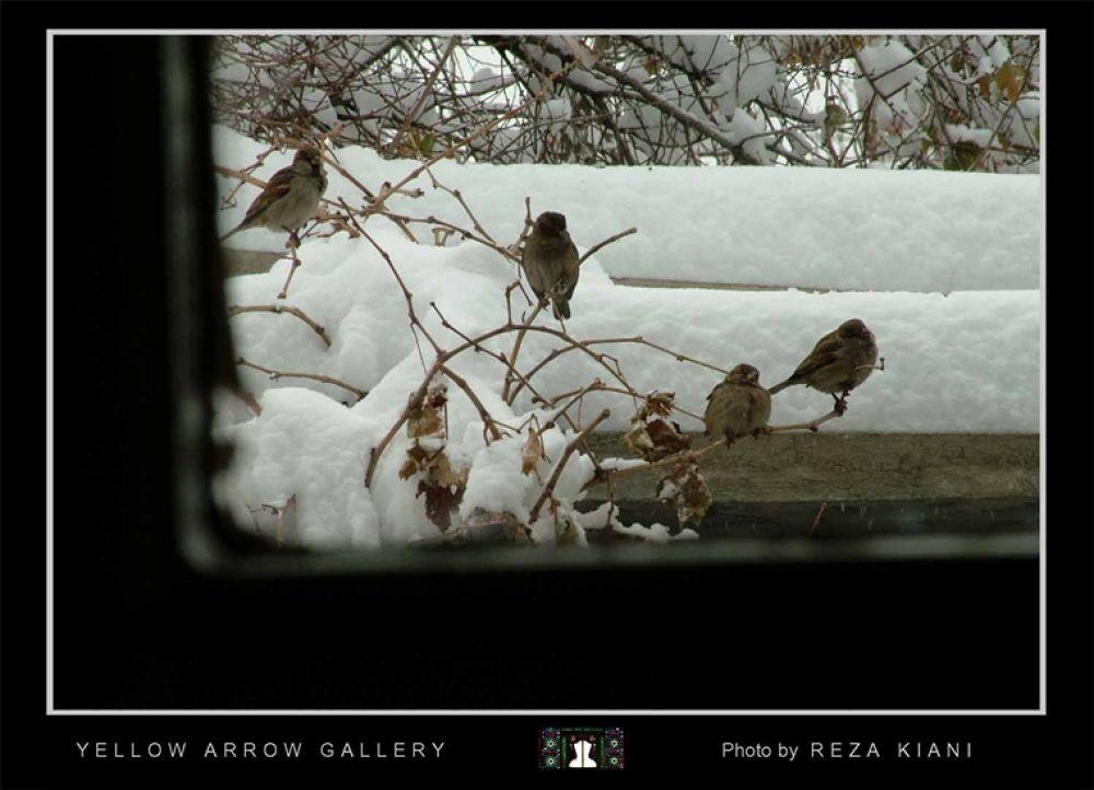 reza kiani gonjeshkaye man by yellowarrow