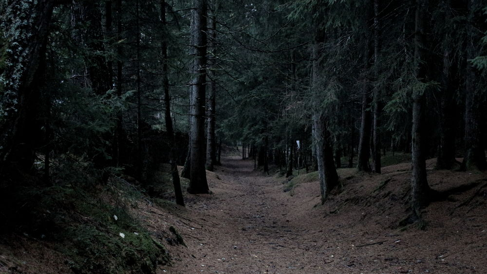 A Pathway through dark woods by Gregor Neumann