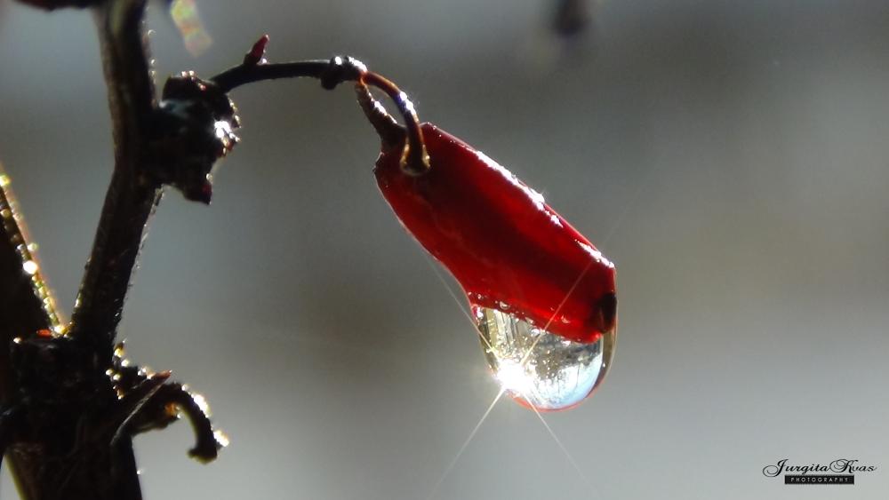 drop macro by Jurgita Kvaseliene