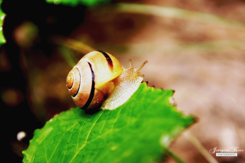 snail by Jurgita Kvaseliene