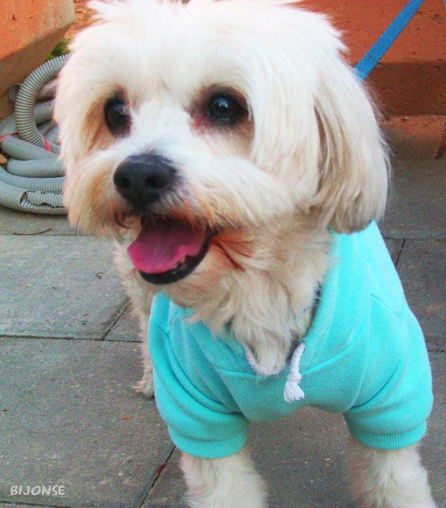 Sweet dog jogs in tracksuit by bijonse