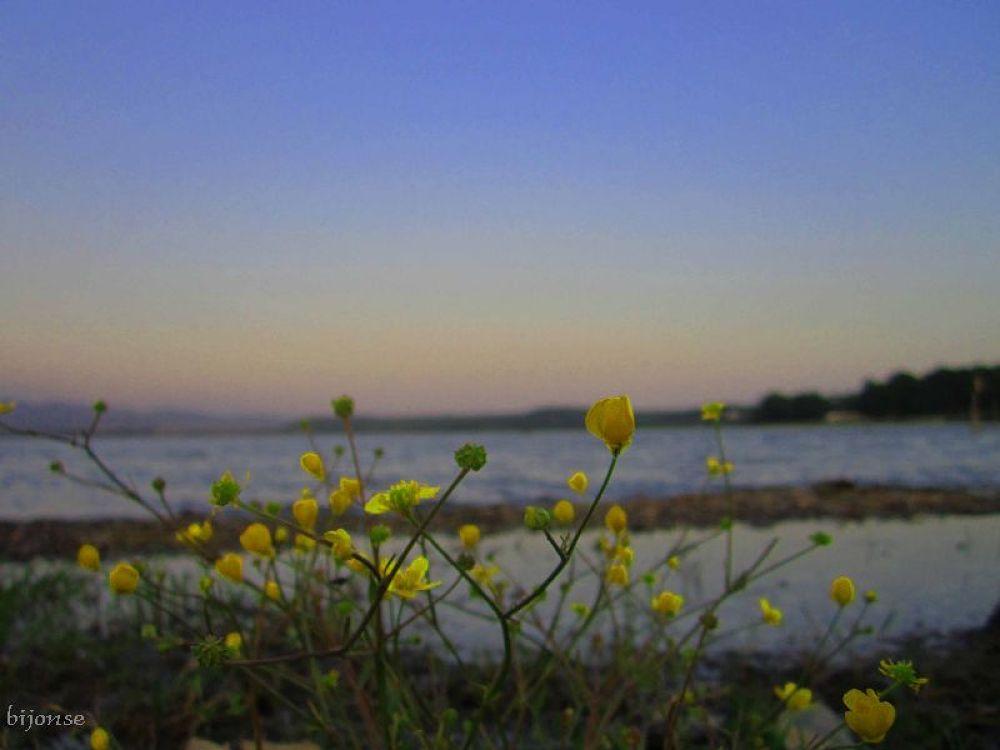 Photo in Landscape #bijonse