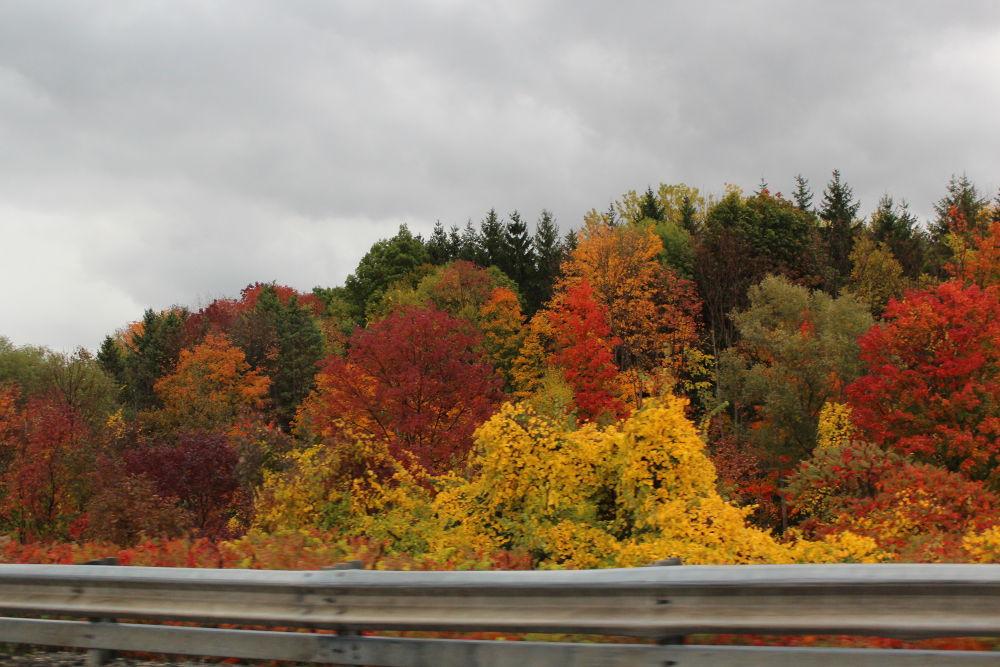 Autumn-Ontario. by Olimpia Iancu