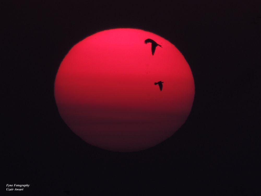Beauty of the Sun - Fyne Fotopgraphy by Uzair Ansari