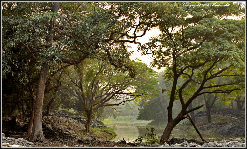 Natural scenery by Nishit Dey