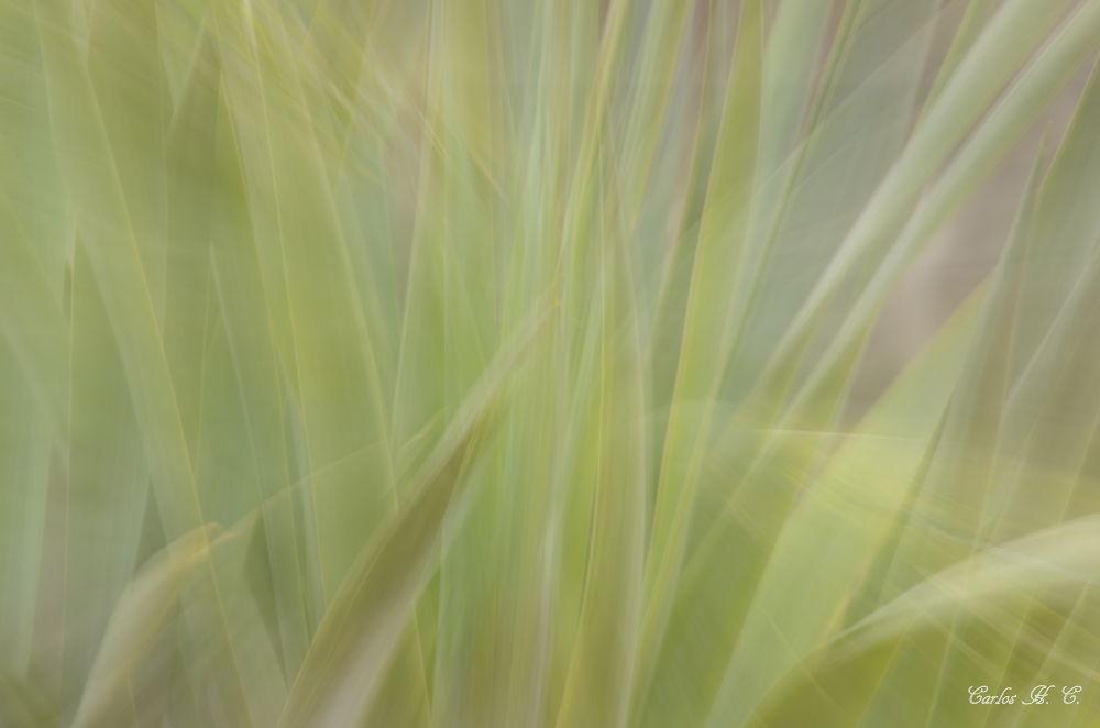 Photo in Random #zoom burst of dragon tree leav