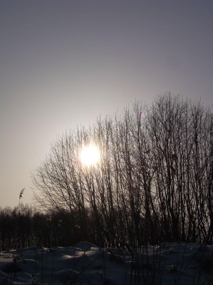 sun in the trees by Zita Užkuraitiene