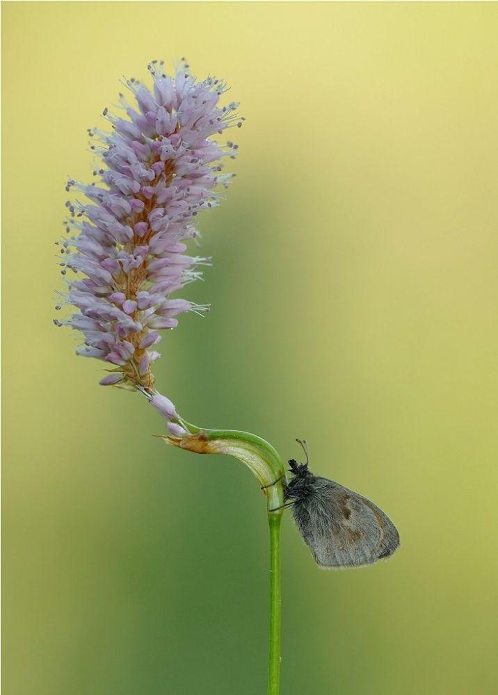nature by Ruurd Visser