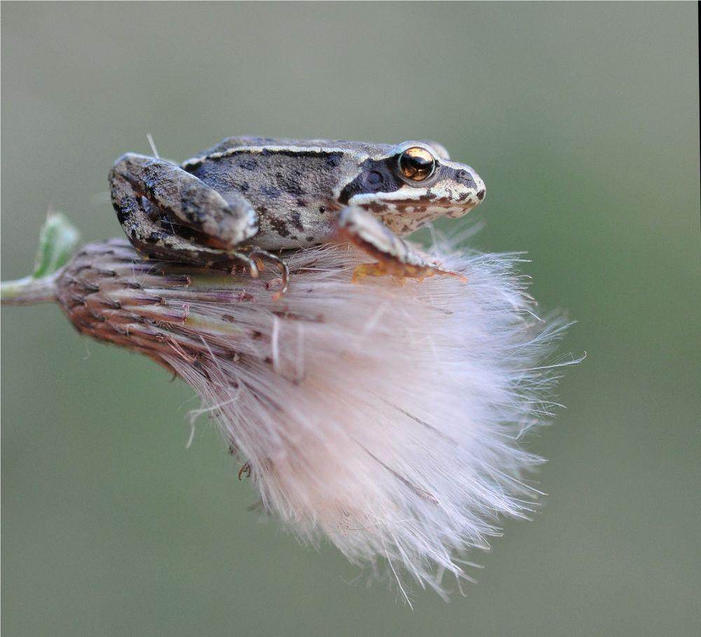 frog by Ruurd Visser