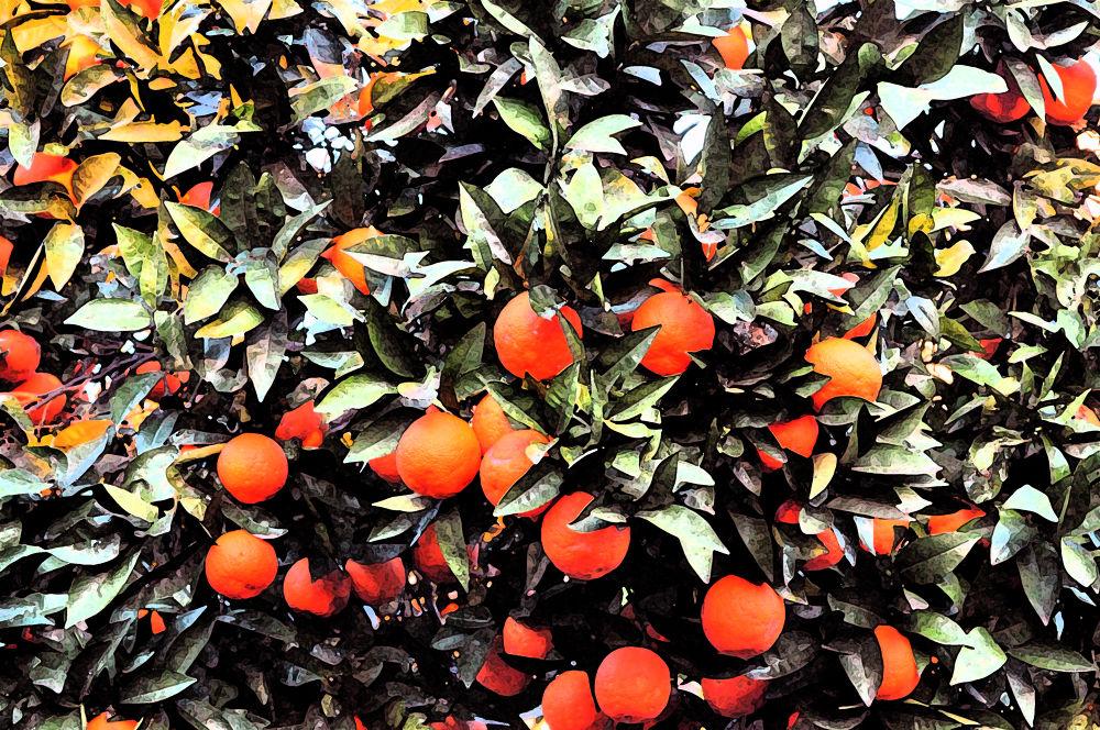 Orange by Alessio Ianniello