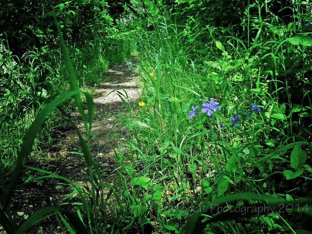 Photo in Landscape #landscape #nature #flowers