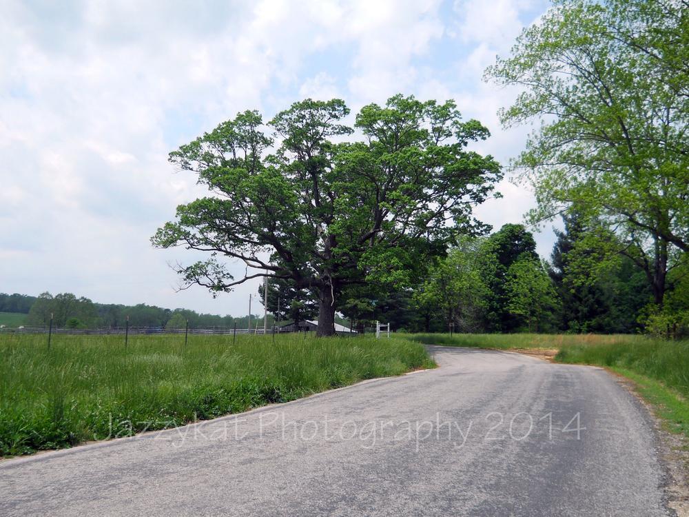 Wire Road Original Trail of Tears Trail by Debbie Bridges