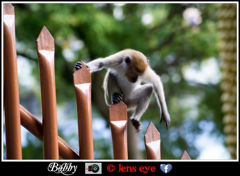 batucave-51 by lenseye