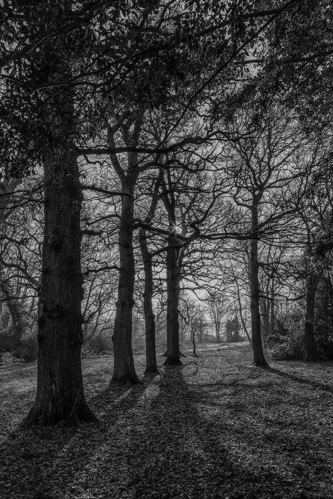 Upton Country Park by Daniel Rose
