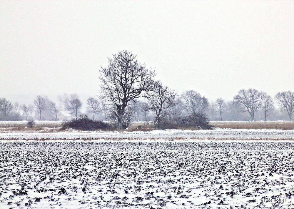 Winter fields by Renée Köhler