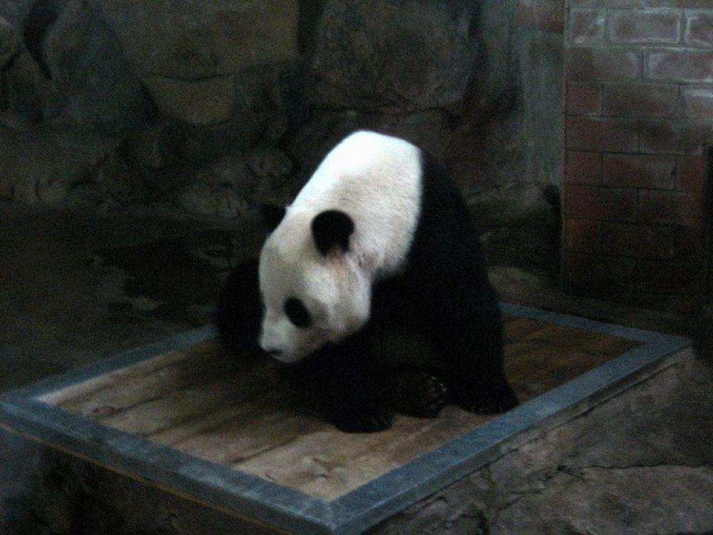 Beijing_Zoo-109 by Arie Boevé