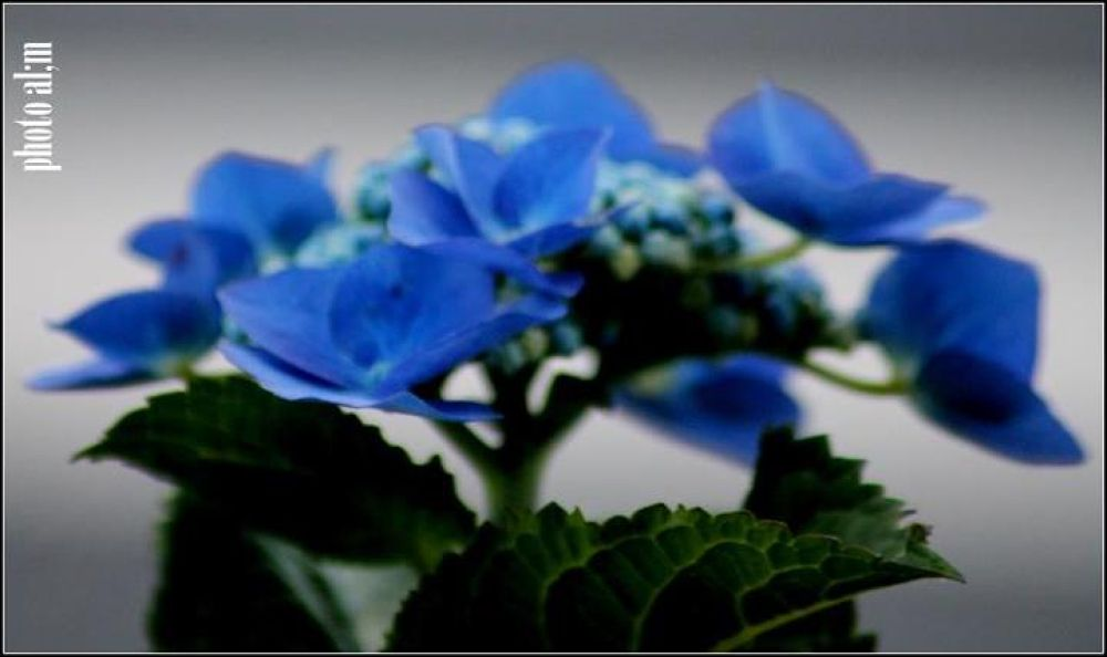 fleures by annlaure