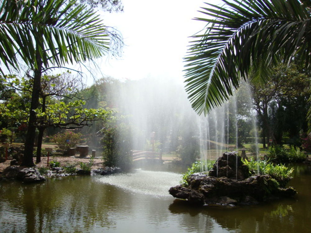Photo in Nature #caldasnovas #jardimjaponês