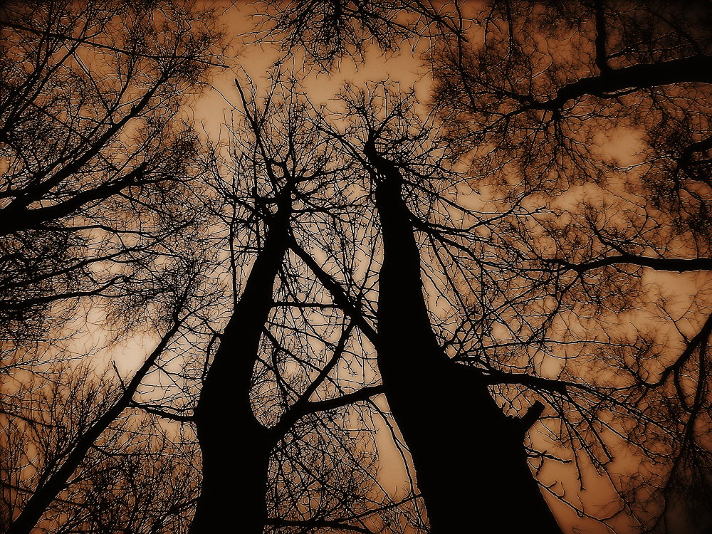 Looking up... by Michelle Dimascio
