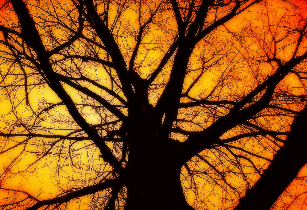 Branching out... by Michelle Dimascio