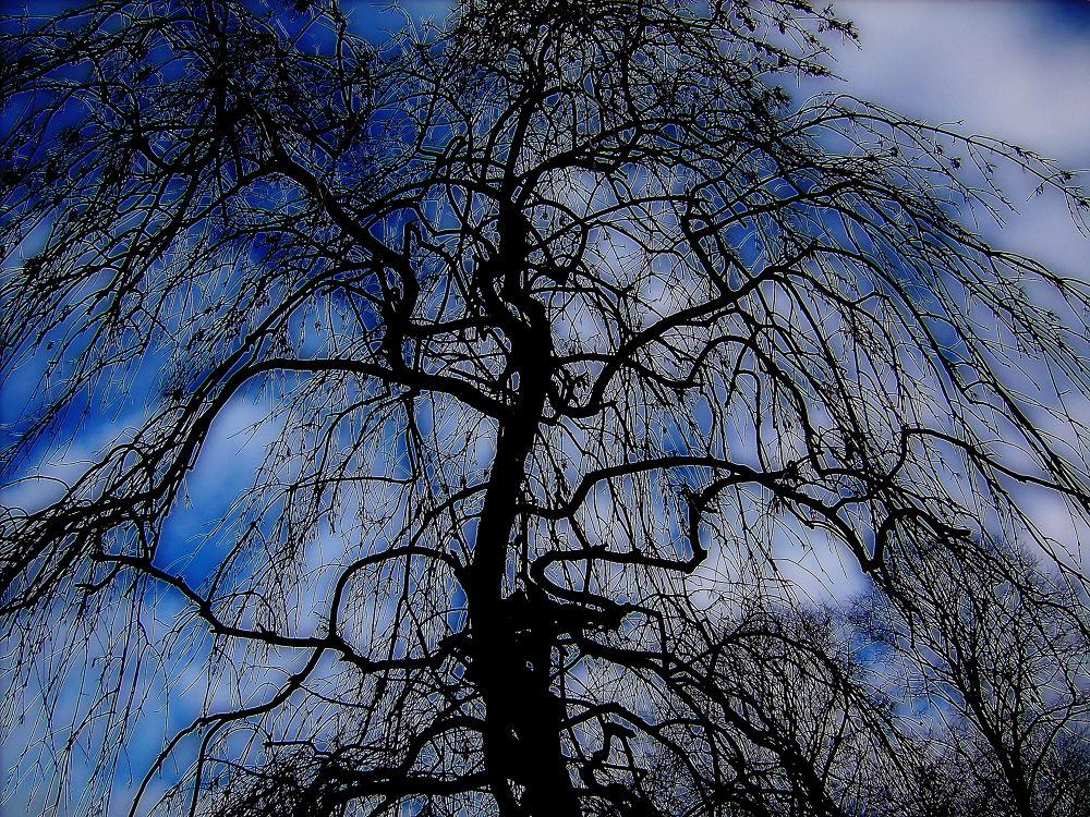 Blue Sky... by Michelle Dimascio