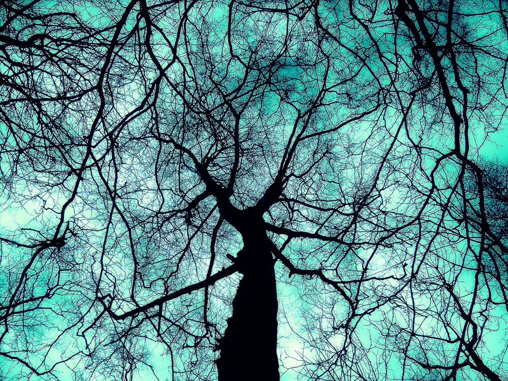 Things are looking up... by Michelle Dimascio