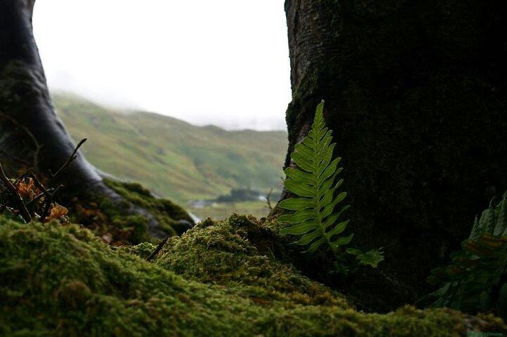 lo sguardo d'Irlanda by Simone Negretto