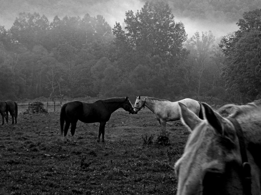 9.15.12-Morning-kiss-in-the-fog-BW by reneeroma
