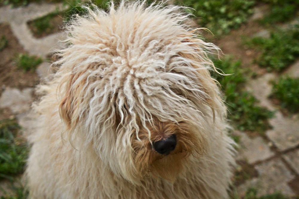 Photo in Animal #dog #animal #hungary #cute #somogy