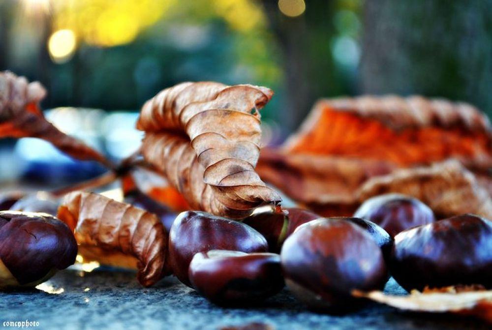 autunno by Concy Lattuca