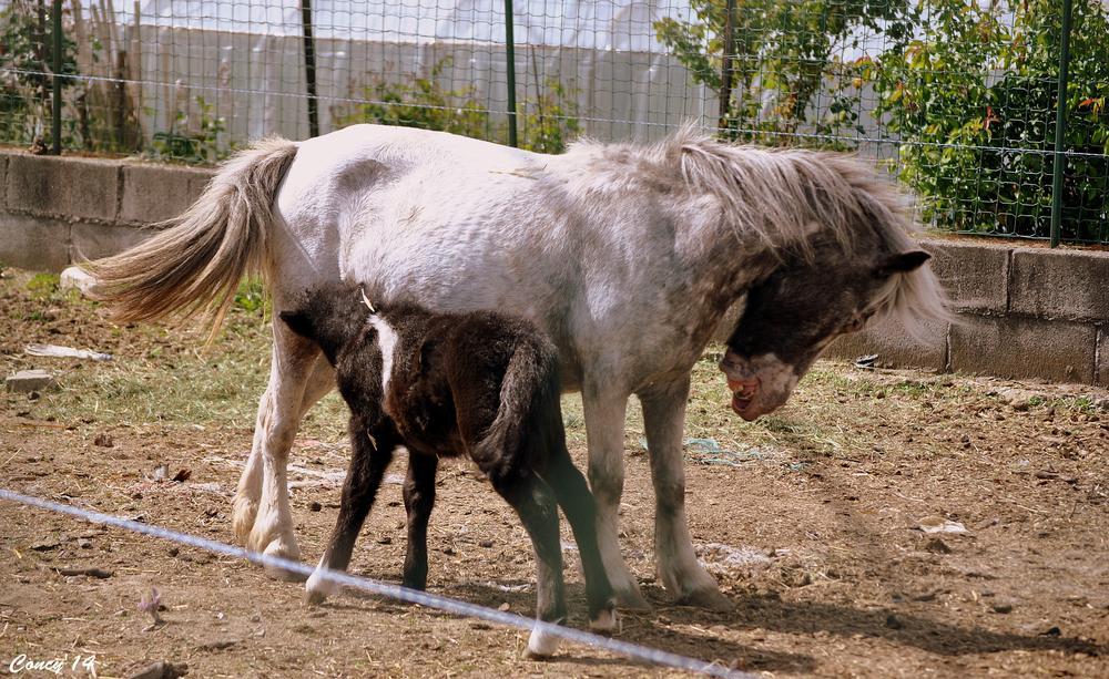 Photo in Animal #cucciolo&mamma #natura