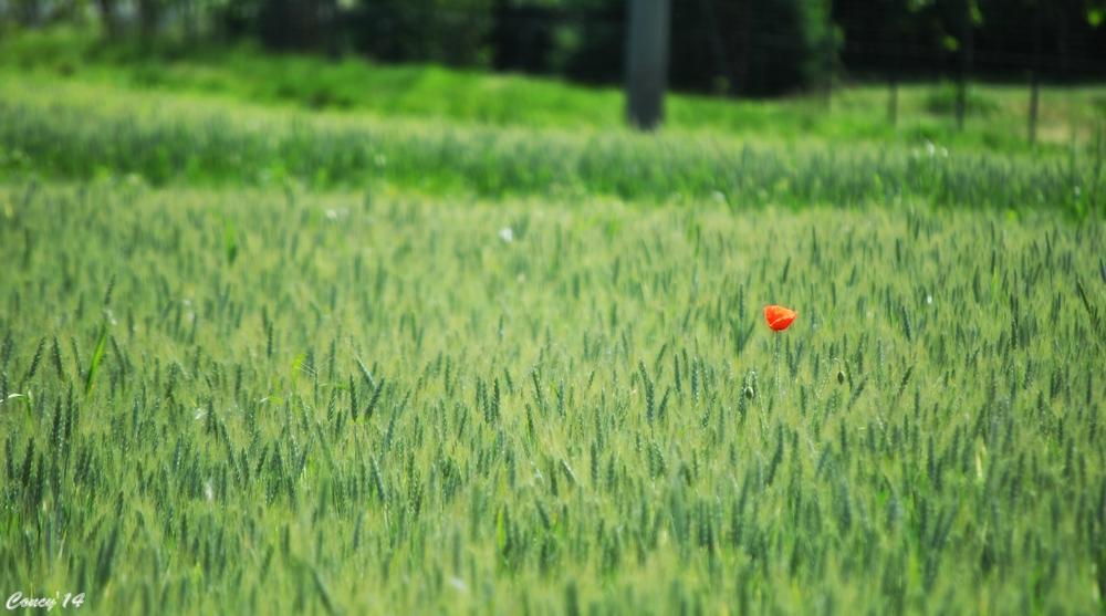 Photo in Rural #passeggiando #verde #sernità
