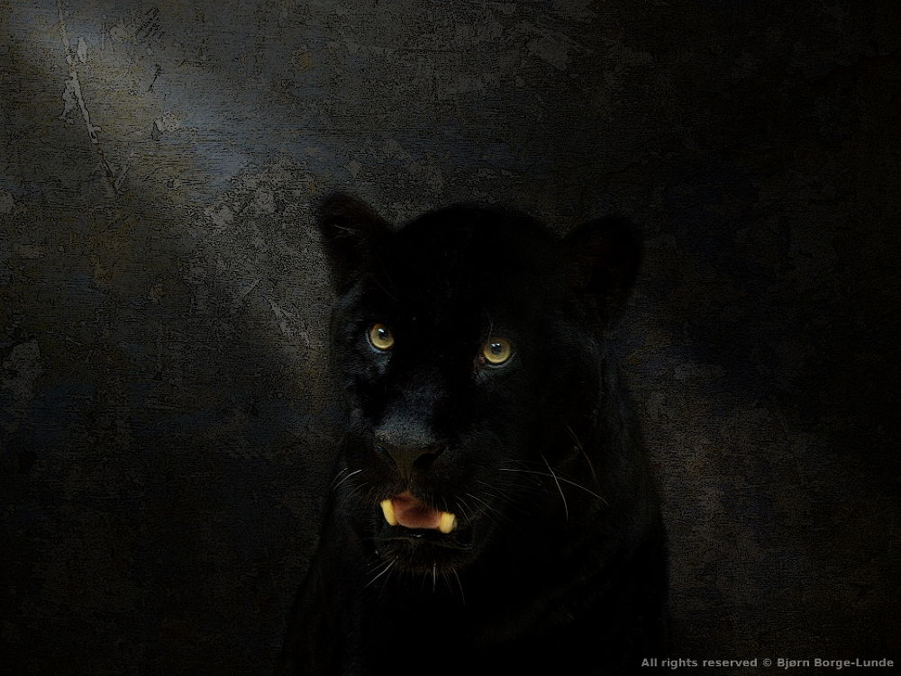 Black Panther by OrdinaryPictures