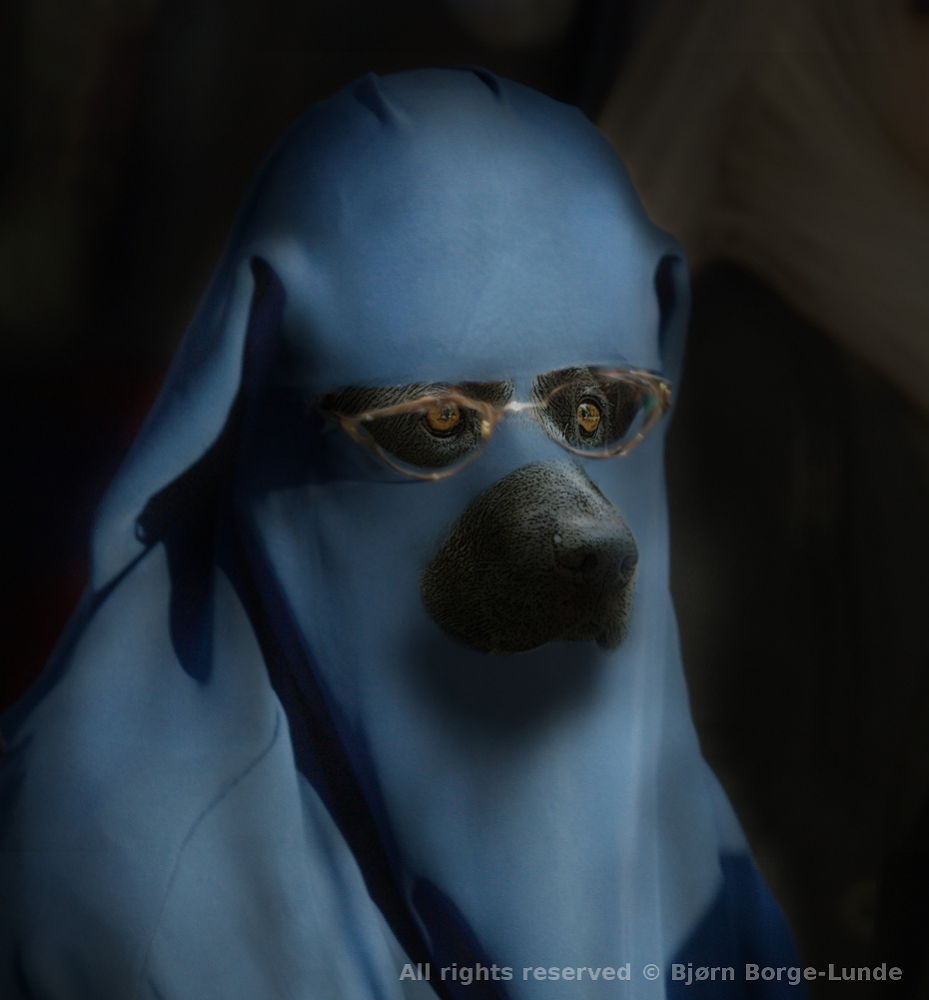 The Muslim Guide Dog Barqua by OrdinaryPictures