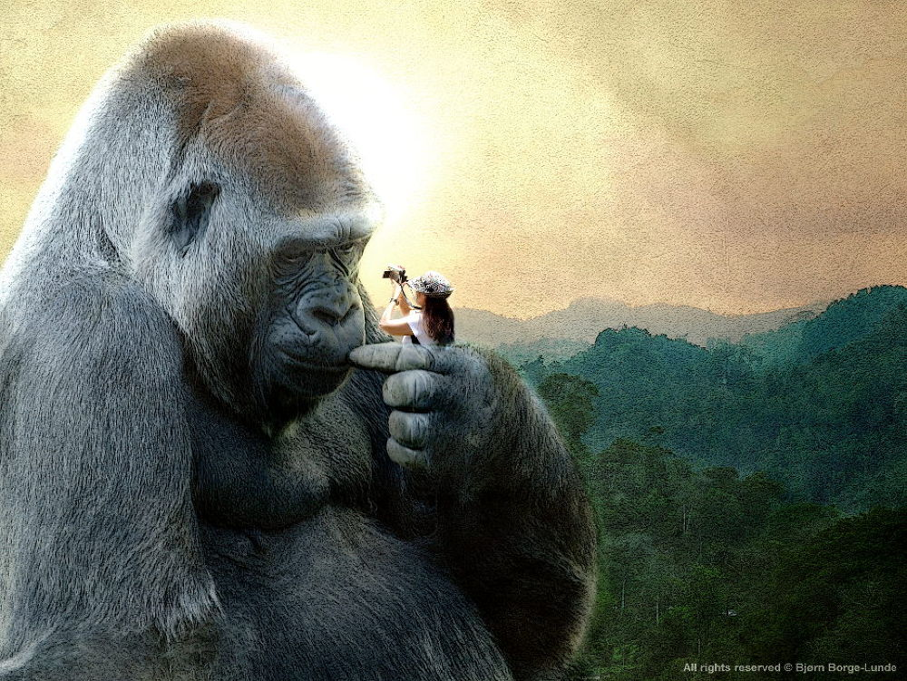 King Kong by OrdinaryPictures