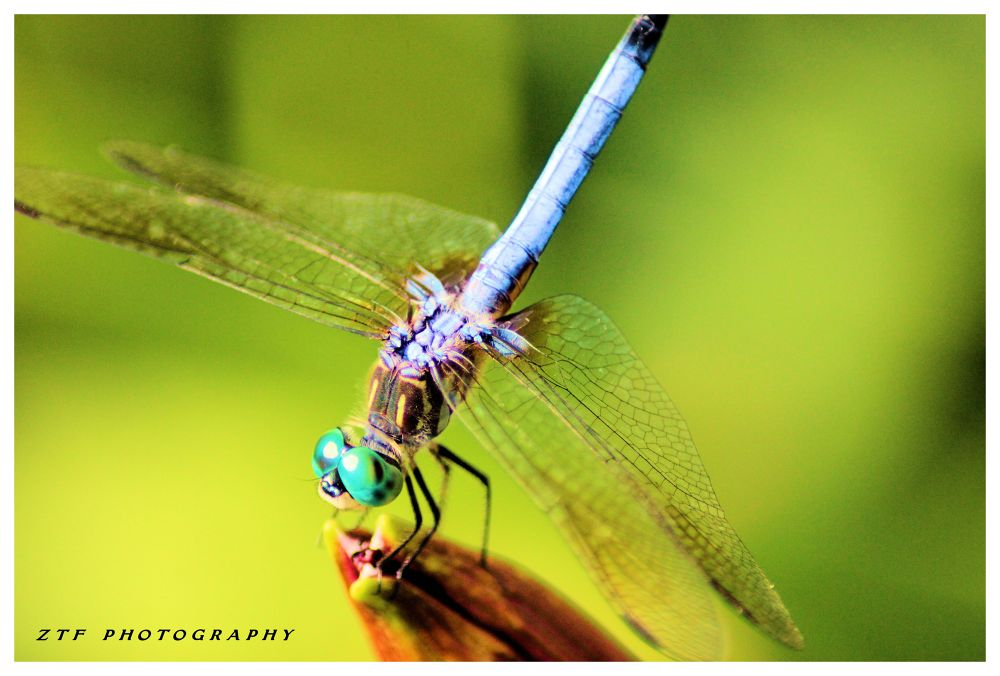 colors by ZTF PHOTOGRAPHY