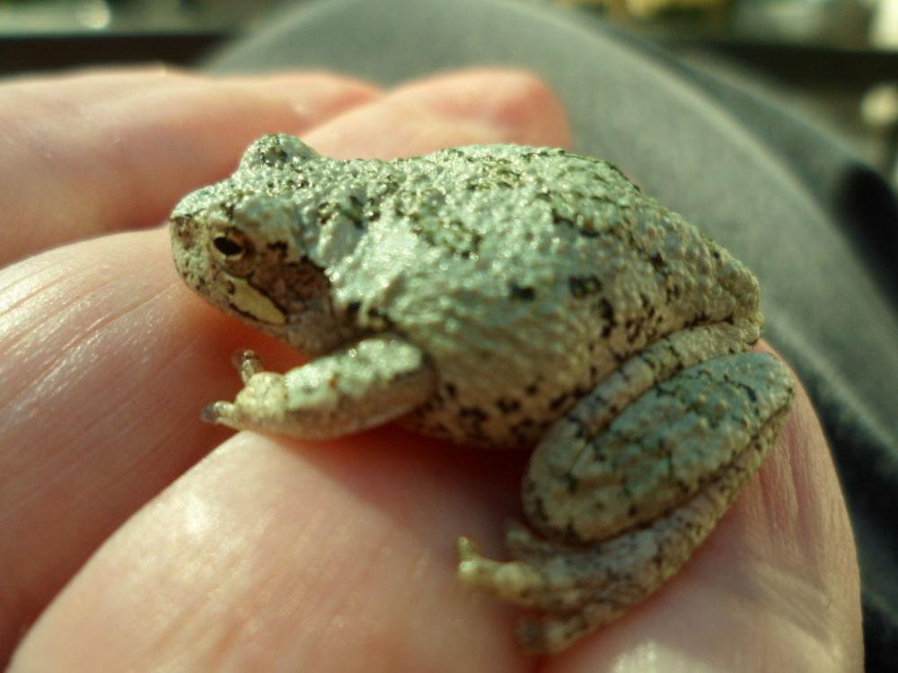 My tiny frog by RivkaWaas