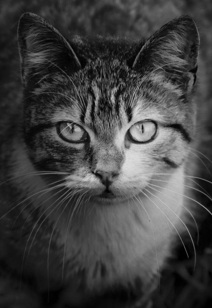 Miao by Andrea Viola