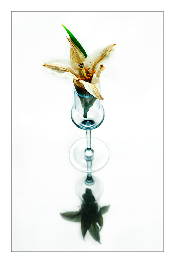 fiore by rossanofaltoni