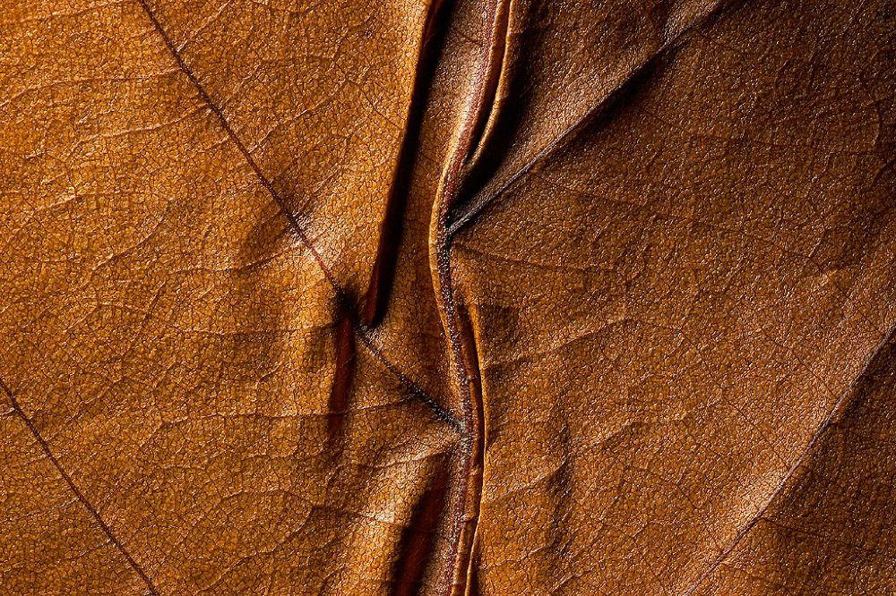 067© M.FROSSARD 2006_copy by jeanmichel45