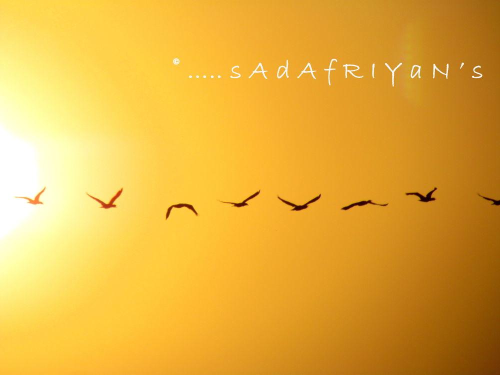 IMG_2714 by sadafriyan