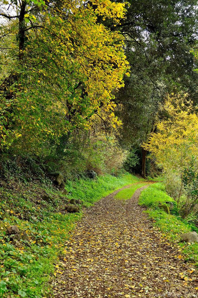 Autumnal path by davidmartinlopez