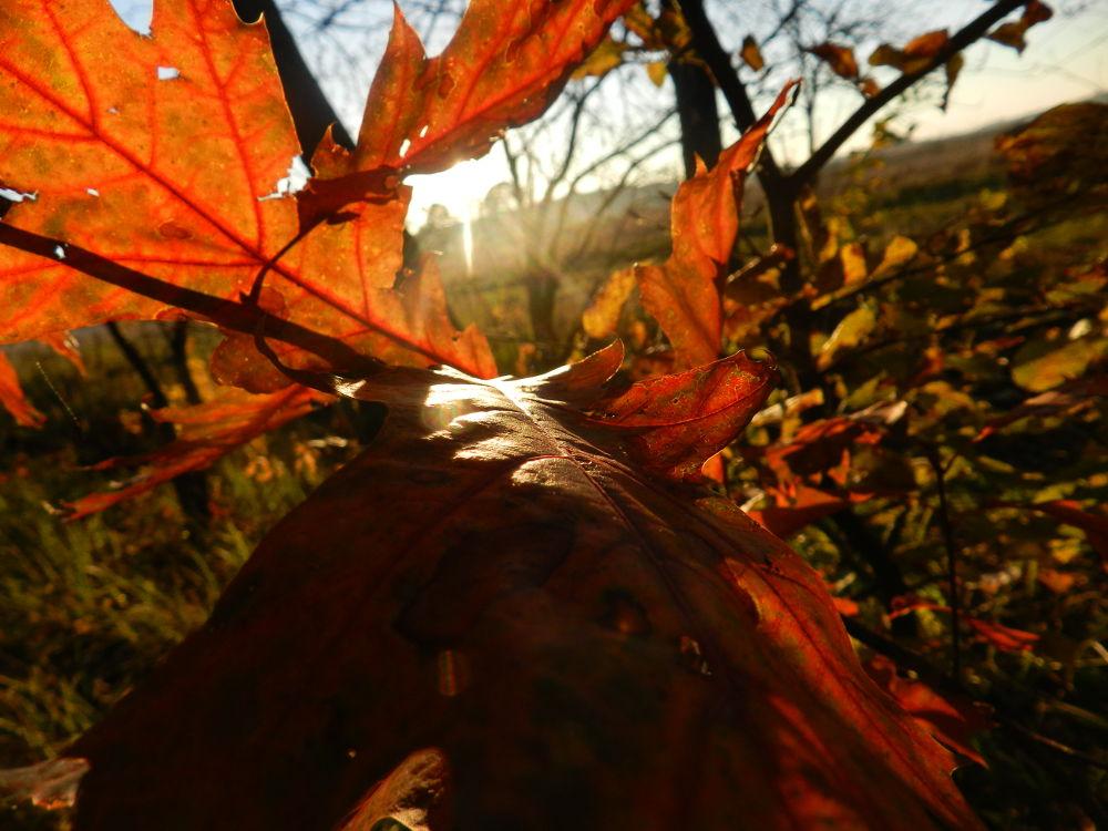 Autumn by ny_kasyanchuk