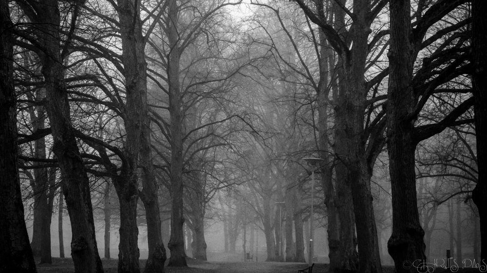 Treeline by Chris Das